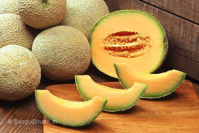How to Cultivate Muskmelon See Method