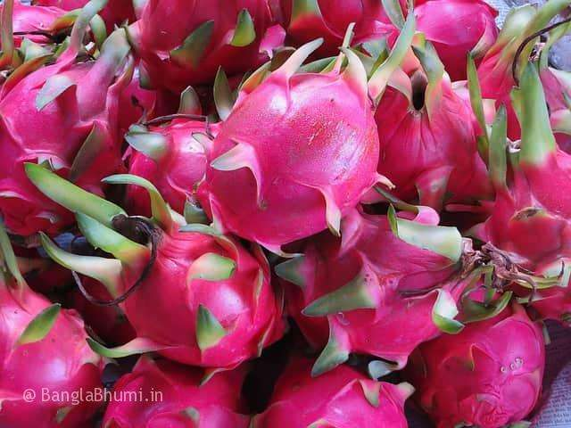Dragon Fruit Cultivation Now in Country