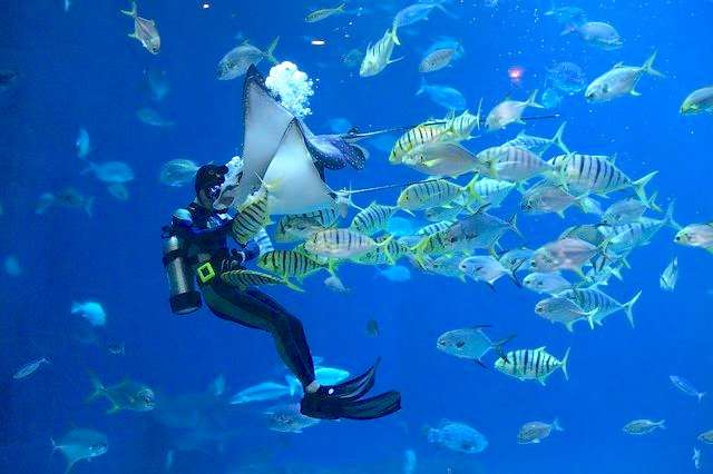 Best Place For Scuba Diving In India