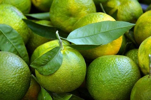 Malta Orange Cultivation Method in Bangla