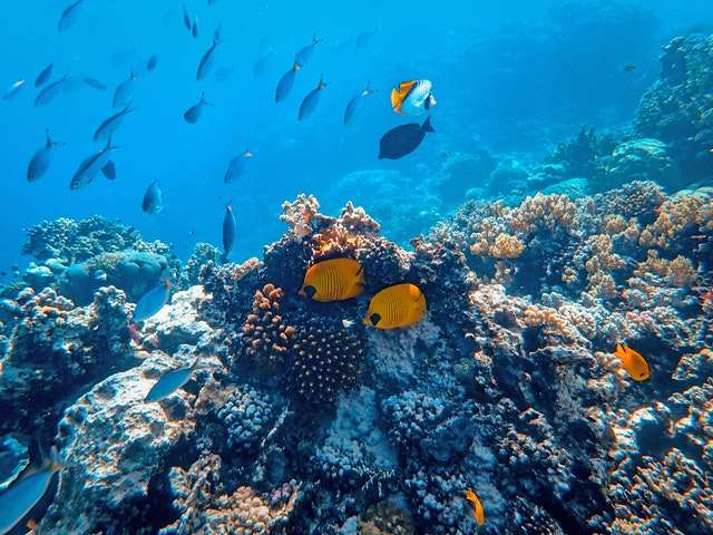 Scuba Diving Beauty of Underwater World
