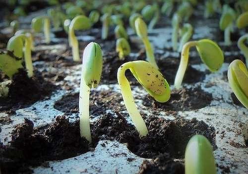Soybean Farming - Seeds