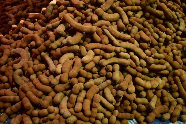 Tamarind Harvesting Method in Bangla